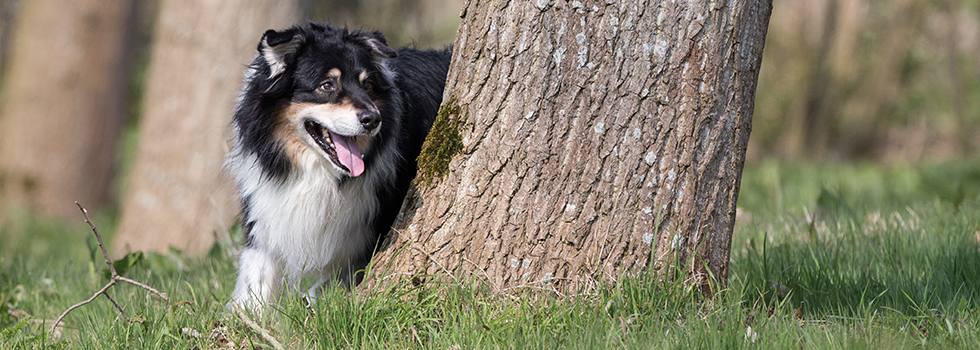 Autumn tips for your pet - dog around tree