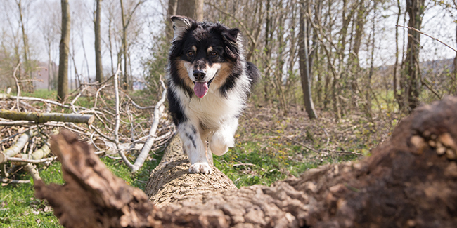 Autumn tips for your pet - Walking over a fallen tree