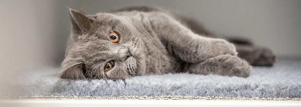 Can Pets Get Coronavirus Prins Petfoods