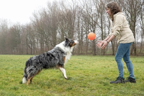 Step 4: Volleyball with your dog